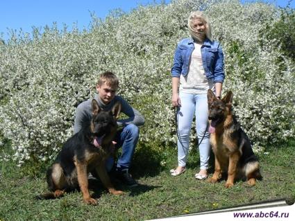 Питомник немецкой овчарки в Саратове, купить щенка, дрессировка собак, передержка собак, купить собаку в кредит