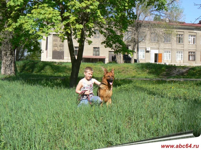 Купить взрослую собаку с документами для разведения