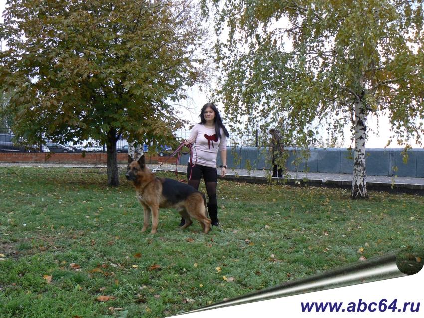 Дрессировка собак в Саратовской области